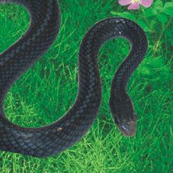 花与蛇类似的电影_花与蛇类似的电影大全分享