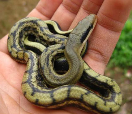 蛇图案简单